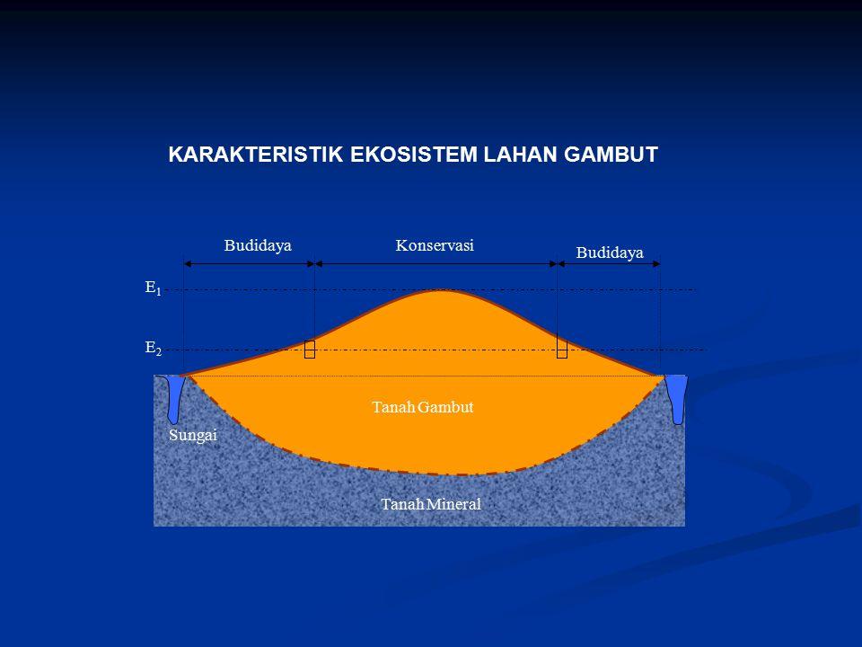 Tanah Gambut Tanah Mineral Sungai Elevasi muka air di kanal Tebal Gambut KonservasiBudidaya E1E1 E2E2 Tanah Gambut Budidaya KARAKTERISTIK EKOSISTEM LA