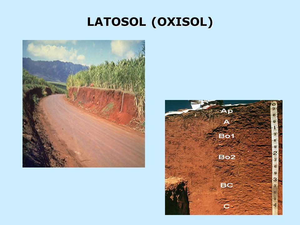 LATOSOL (OXISOL)