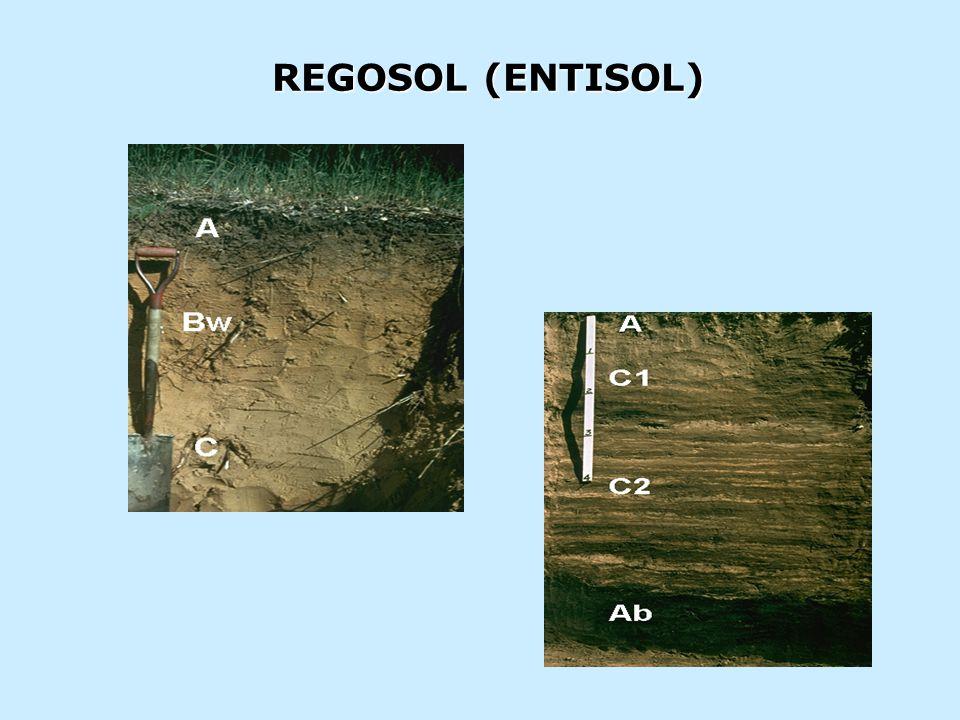 REGOSOL (ENTISOL)