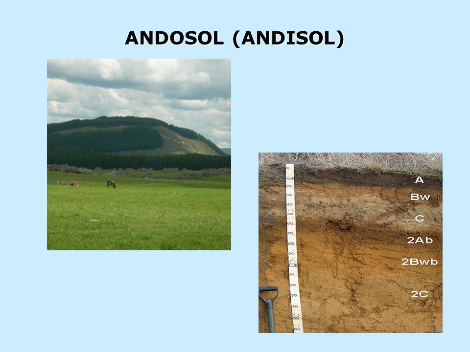 · PEMBETUKAN: Andosol (ando, hitam) adalah tanah berwarna gelap khususnya pada lapisan atas.