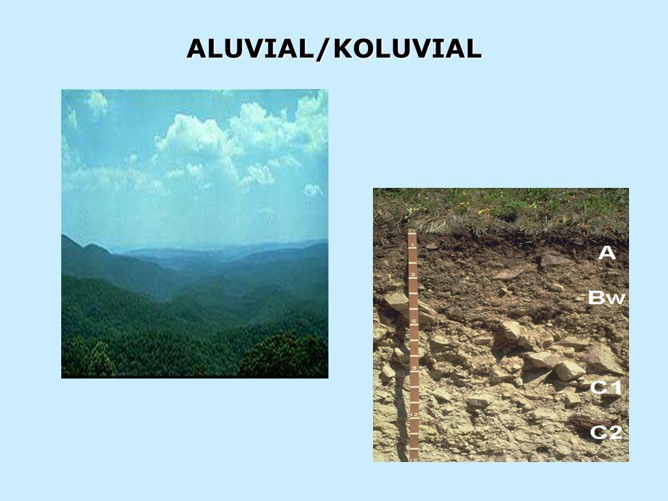 PEMBETUKAN: Inceptisols (inceptum- mulai mengembang) adalah tanah- tanah mineral yg secara berangsur memperlihatkan horizon pembtk tnh; dan termsk tnh-tnh yg masih muda SOLUM : Dangkal, Sedang TEKSTUR : Kasar, Sedang DRAINASE: sedang WARNA : Gelap, Agak Cerah pH : Netral SIFAT-SIFAT: -Musim kemarau: atas  kering, bawah  Lembab -Musim penghujan  lembab -Daya tahan air  sedang -Daya pegang hara  sedang -Masalah unsur N, S, (P, K, Ca, Mg) PENGELOLAAN: -Pemberian BO sedang -Pupuk N, S, (P, K, Ca, Mg)  ke tanah -Pupuk N, S  ke daun
