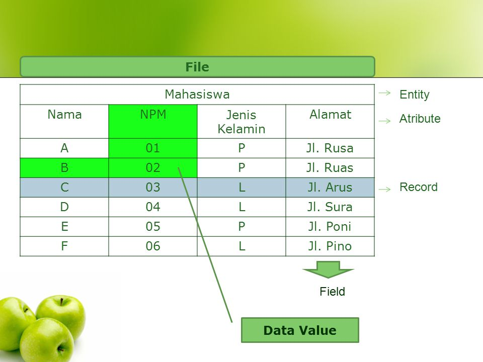 Mahasiswa NamaNPMJenis Kelamin Alamat A01PJl. Rusa B02PJl. Ruas C03LJl. Arus D04LJl. Sura E05PJl. Poni F06LJl. Pino Entity Atribute Record Field File