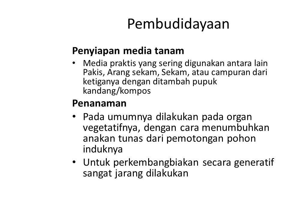 Pembudidayaan Penyiapan media tanam Media praktis yang sering digunakan antara lain Pakis, Arang sekam, Sekam, atau campuran dari ketiganya dengan dit