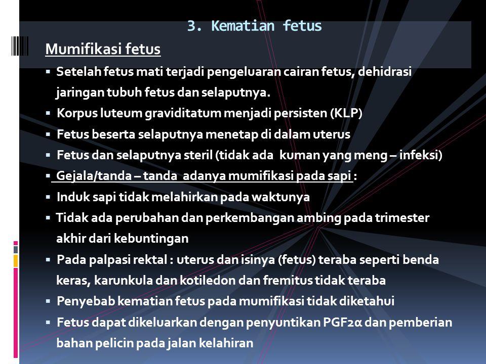 Mumifikasi fetus  Setelah fetus mati terjadi pengeluaran cairan fetus, dehidrasi jaringan tubuh fetus dan selaputnya.  Korpus luteum graviditatum me