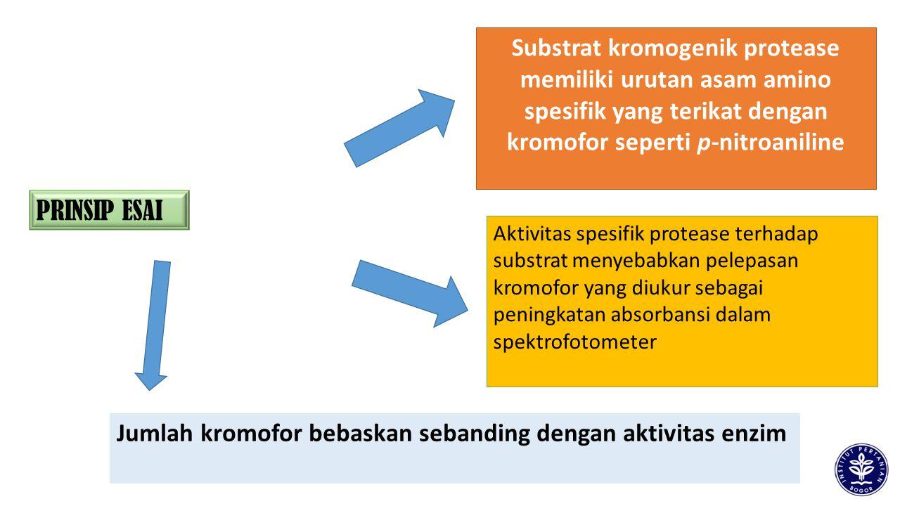Jumlah kromofor bebaskan sebanding dengan aktivitas enzim PRINSIP ESAI Substrat kromogenik protease memiliki urutan asam amino spesifik yang terikat d