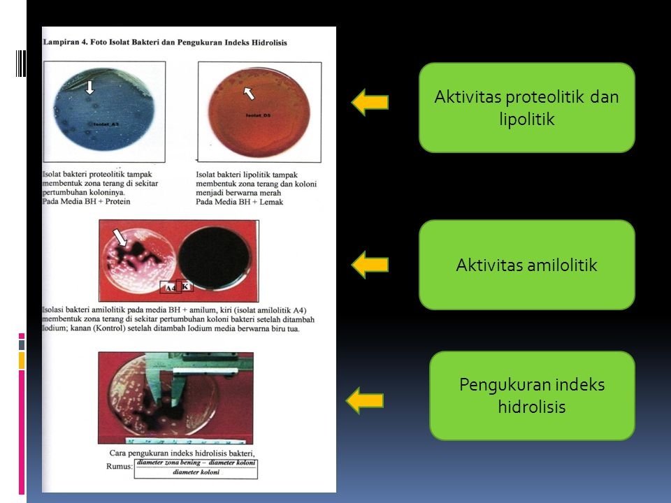 Pengukuran indeks hidrolisis Aktivitas amilolitik Aktivitas proteolitik dan lipolitik