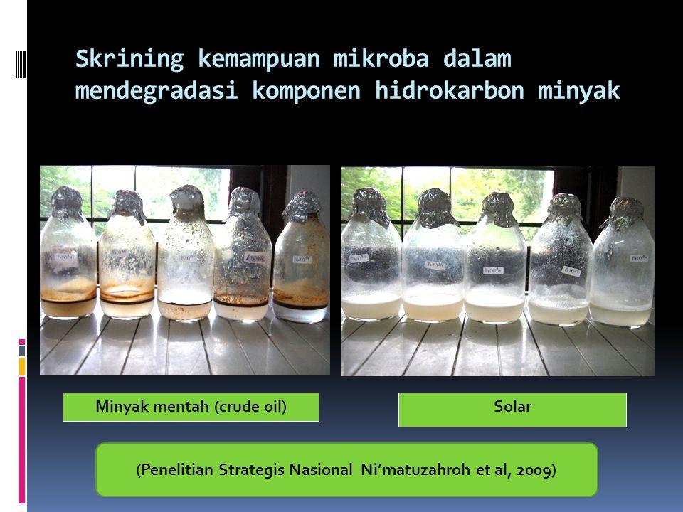 Skrining kemampuan mikroba dalam mendegradasi komponen hidrokarbon minyak Minyak mentah (crude oil)Solar (Penelitian Strategis Nasional Ni'matuzahroh
