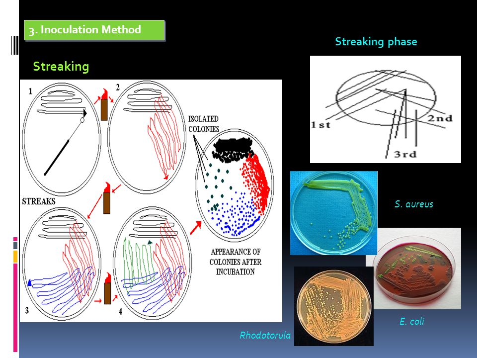 3. Inoculation Method Streaking Streaking phase S. aureus E. coli Rhodotorula