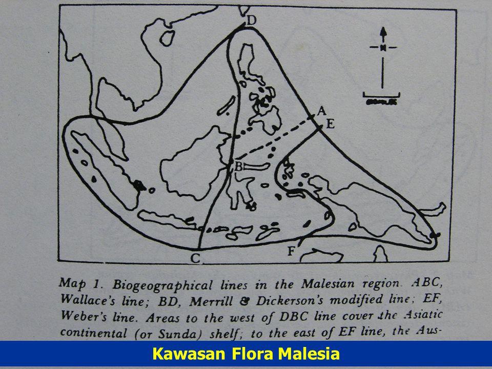 Mengapa Dendrologi penting ? Hutan Indonesia termasuk kawasan flora Malesia yg sangat kaya akan jenis-jenis tumbuhan (biodiversitas tbh-an sangat ting