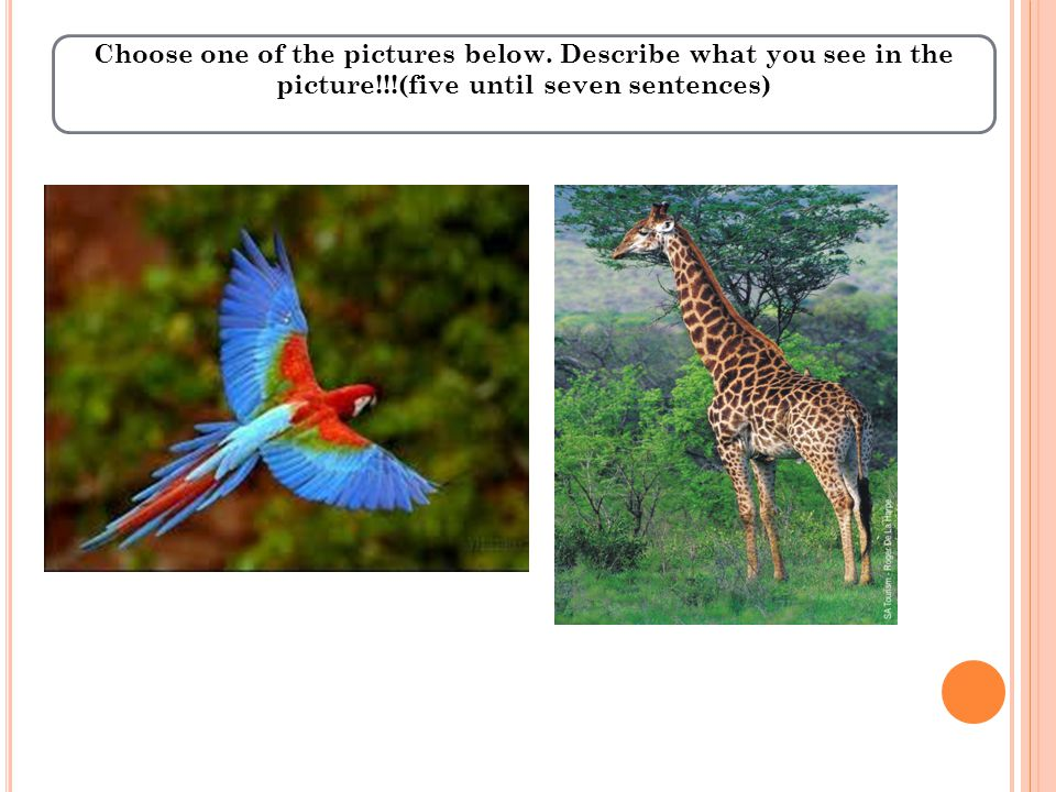 Choose one of the pictures below.
