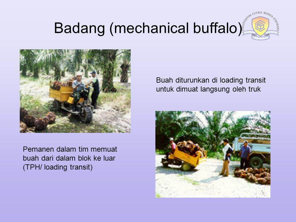 Badang (mechanical buffalo) Pemanen dalam tim memuat buah dari dalam blok ke luar (TPH/ loading transit) Buah diturunkan di loading transit untuk dimu