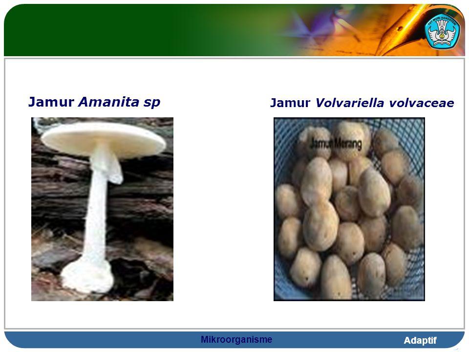 Adaptif Mikroorganisme Jamur Amanita sp Jamur Volvariella volvaceae