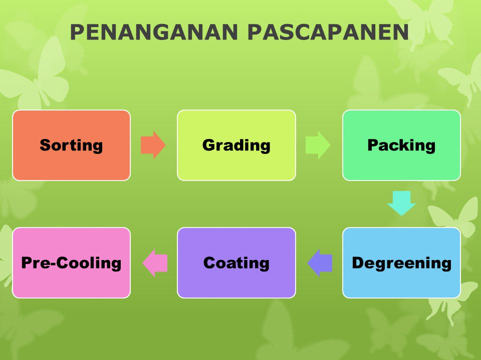 PENANGANAN PASCAPANEN SortingGradingPackingDegreeningCoatingPre-Cooling