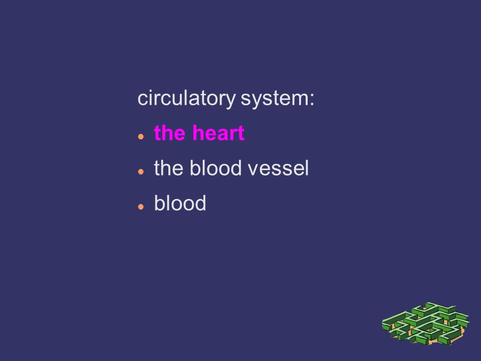 circulatory system: the heart the blood vessel blood