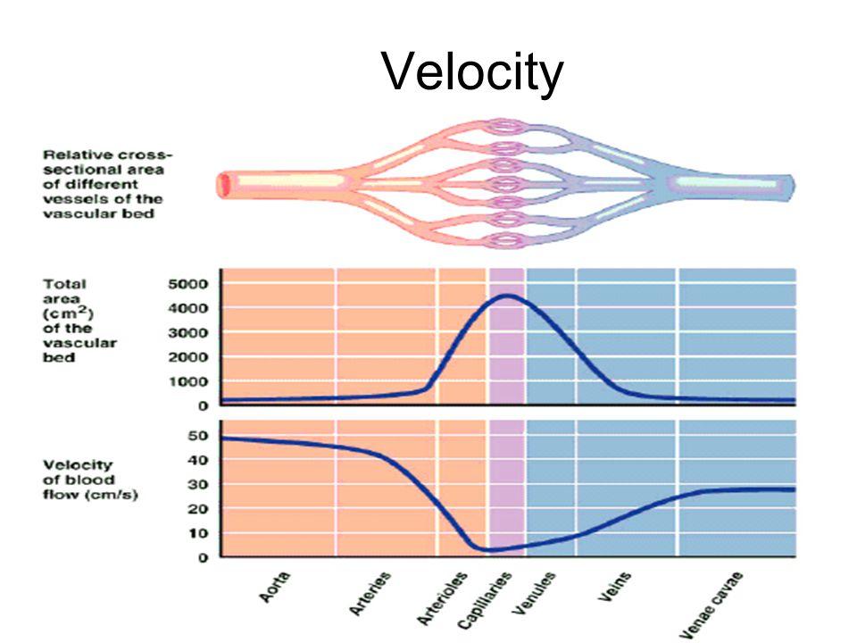 28 Velocity