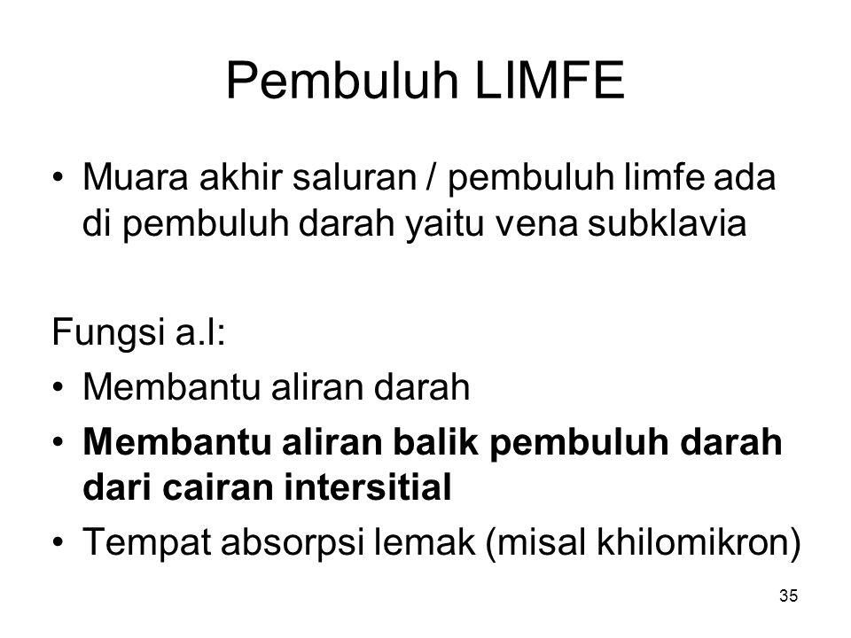 35 Pembuluh LIMFE Muara akhir saluran / pembuluh limfe ada di pembuluh darah yaitu vena subklavia Fungsi a.l: Membantu aliran darah Membantu aliran balik pembuluh darah dari cairan intersitial Tempat absorpsi lemak (misal khilomikron)
