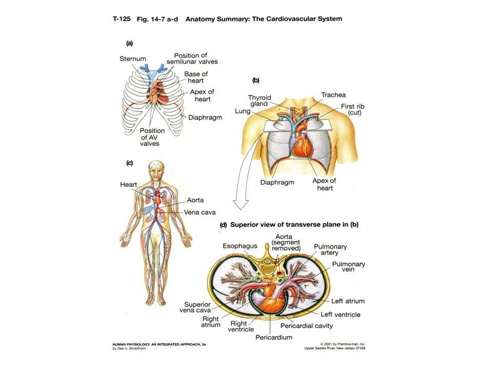 38 Pengukuran Tekanan darah Pulse pressure Heart rate Nilai normal….