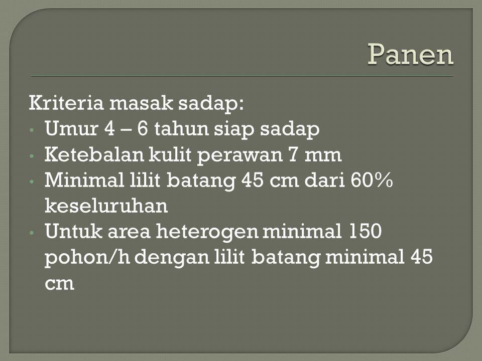 Kriteria masak sadap: Umur 4 – 6 tahun siap sadap Ketebalan kulit perawan 7 mm Minimal lilit batang 45 cm dari 60% keseluruhan Untuk area heterogen mi