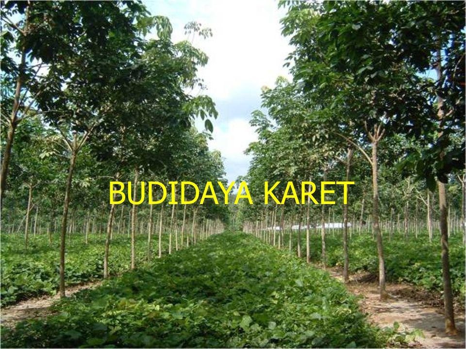 Indonesia merupakan negara kedua penghasil karet alami di dunia (sekitar 28 persen dari produksi karet dunia di tahun 2010), sedikit di belakang Thailand (sekitar 30 persen).