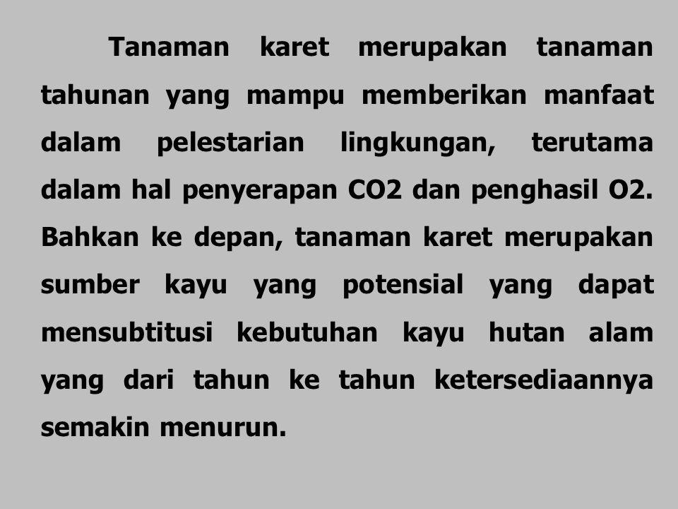 Tanaman karet merupakan tanaman tahunan yang mampu memberikan manfaat dalam pelestarian lingkungan, terutama dalam hal penyerapan CO2 dan penghasil O2