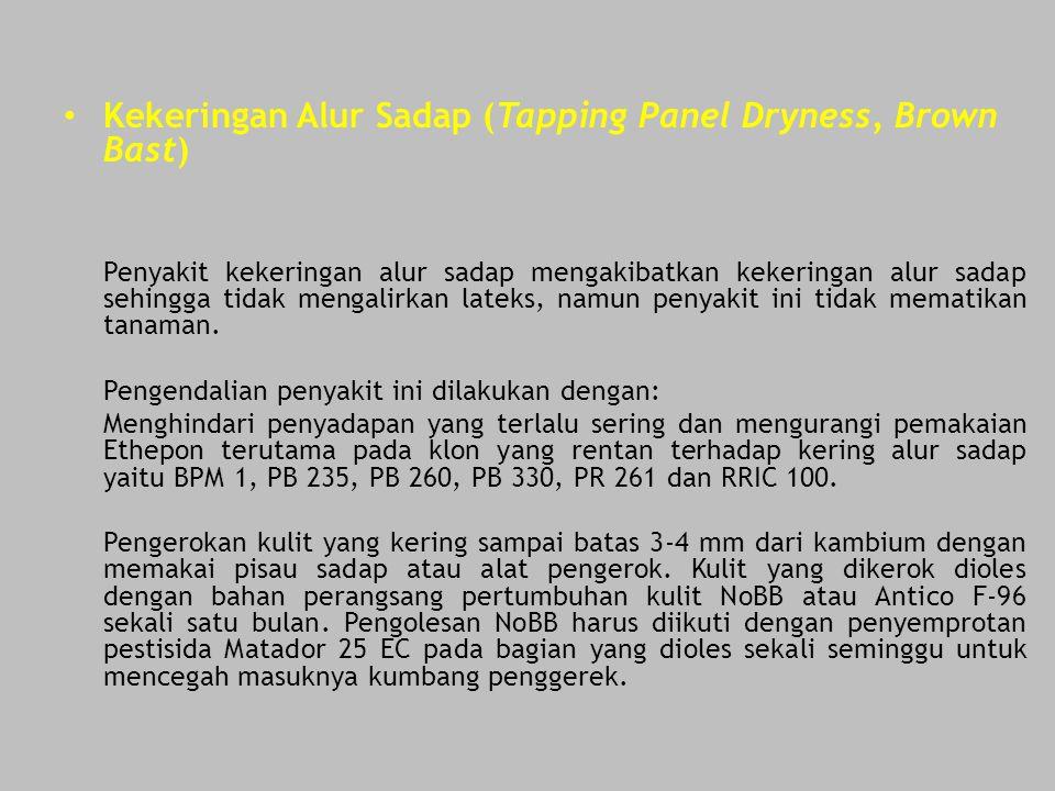 Kekeringan Alur Sadap (Tapping Panel Dryness, Brown Bast) Penyakit kekeringan alur sadap mengakibatkan kekeringan alur sadap sehingga tidak mengalirka