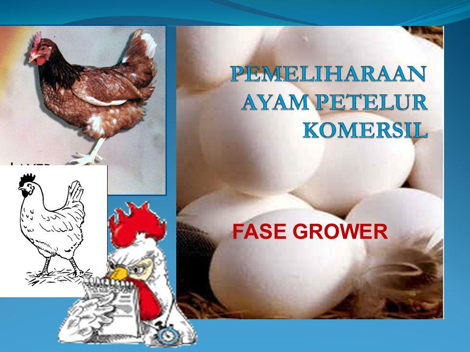 Pada ayam petelur, kecepatan pertumbuhan mencapai derajat tertinggi yaitu setelah menetas sampai mencapai umur 6 – 8 minggu dan setelah mencapai umur 12 minggu persentase pertumbuhan relatif menurun lagi, sesuai dengan bertambahnya umur.