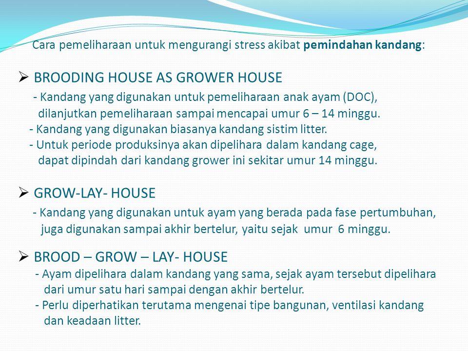 Cara pemeliharaan untuk mengurangi stress akibat pemindahan kandang:  BROODING HOUSE AS GROWER HOUSE - Kandang yang digunakan untuk pemeliharaan anak