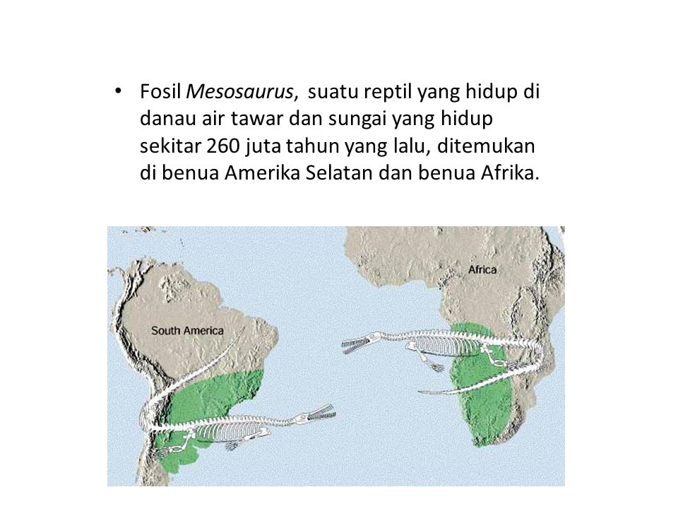 Fosil Mesosaurus, suatu reptil yang hidup di danau air tawar dan sungai yang hidup sekitar 260 juta tahun yang lalu, ditemukan di benua Amerika Selata