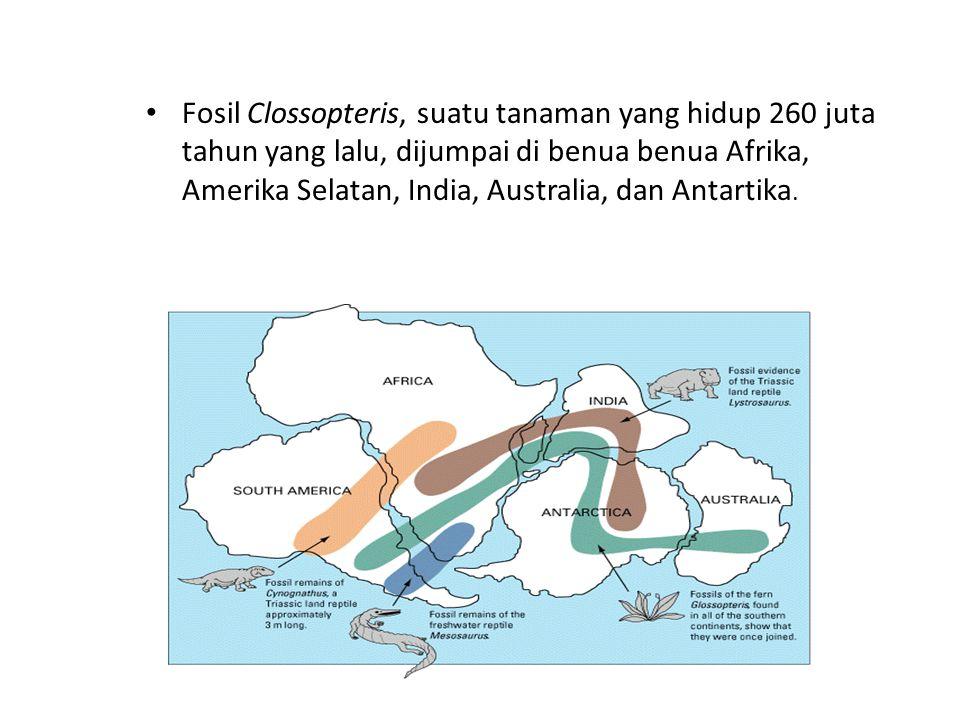 Fosil Clossopteris, suatu tanaman yang hidup 260 juta tahun yang lalu, dijumpai di benua benua Afrika, Amerika Selatan, India, Australia, dan Antartik