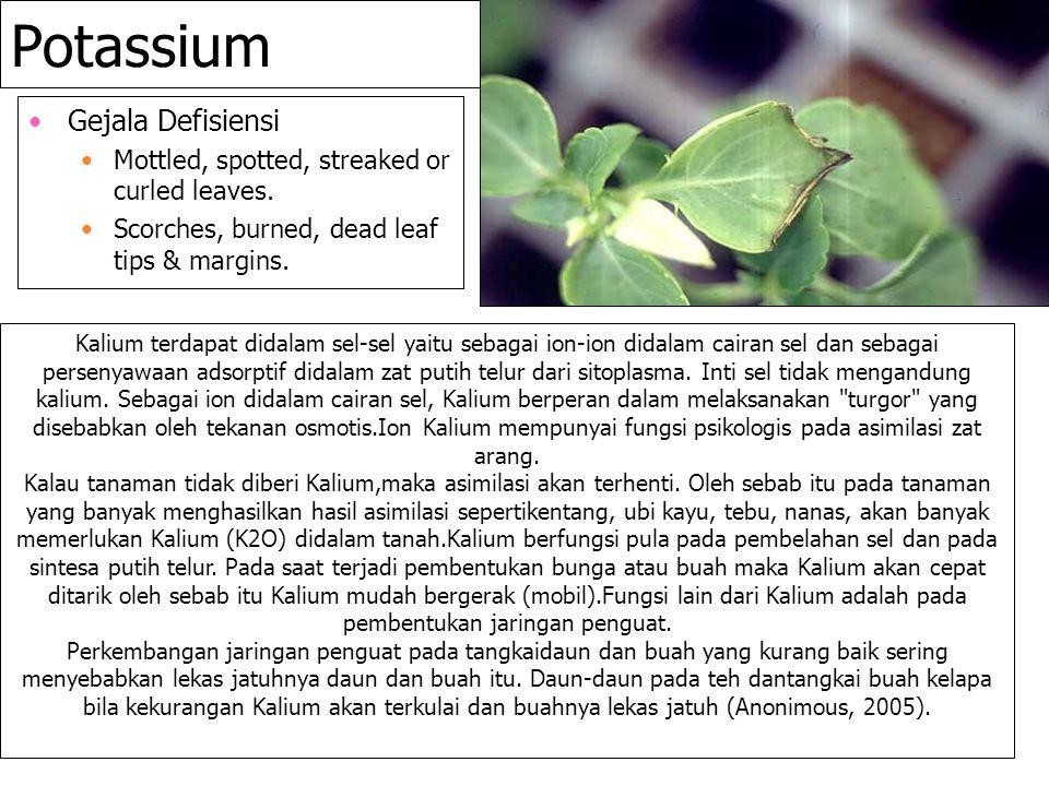 Potassium Gejala Defisiensi Mottled, spotted, streaked or curled leaves. Scorches, burned, dead leaf tips & margins. Kalium terdapat didalam sel-sel y