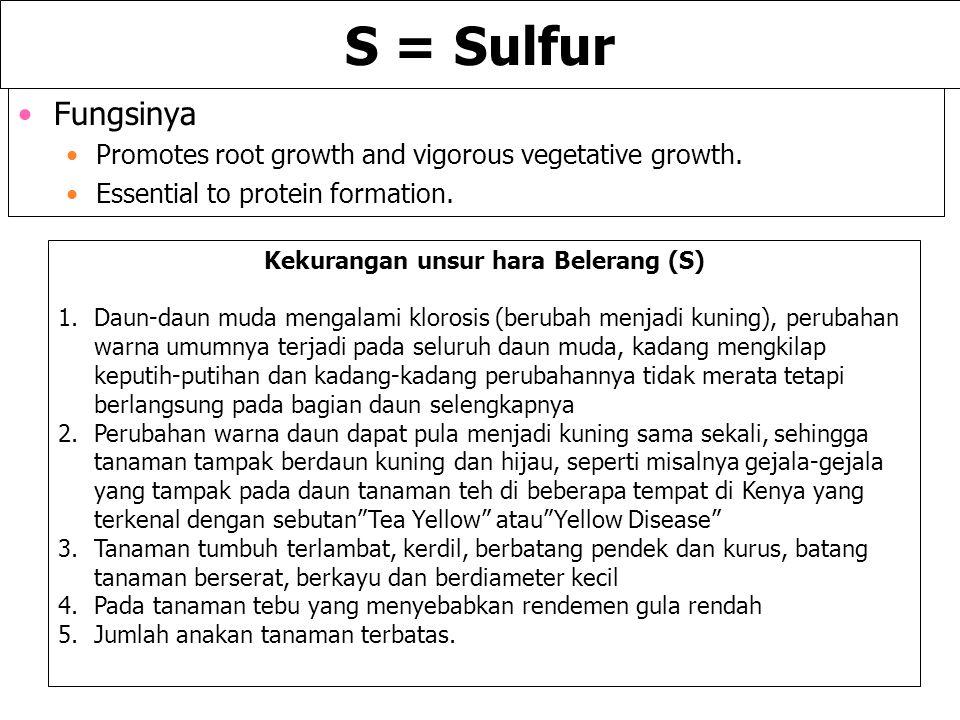 S = Sulfur Fungsinya Promotes root growth and vigorous vegetative growth. Essential to protein formation. Kekurangan unsur hara Belerang (S) 1.Daun-da