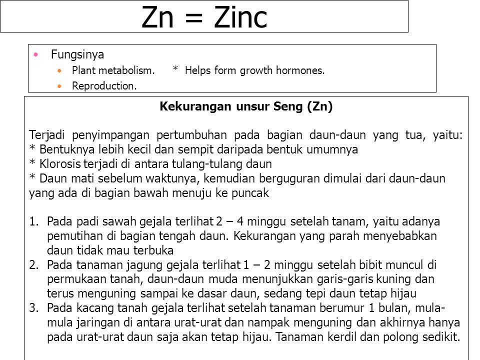 Zn = Zinc Fungsinya Plant metabolism. * Helps form growth hormones. Reproduction. Kekurangan unsur Seng (Zn) Terjadi penyimpangan pertumbuhan pada bag