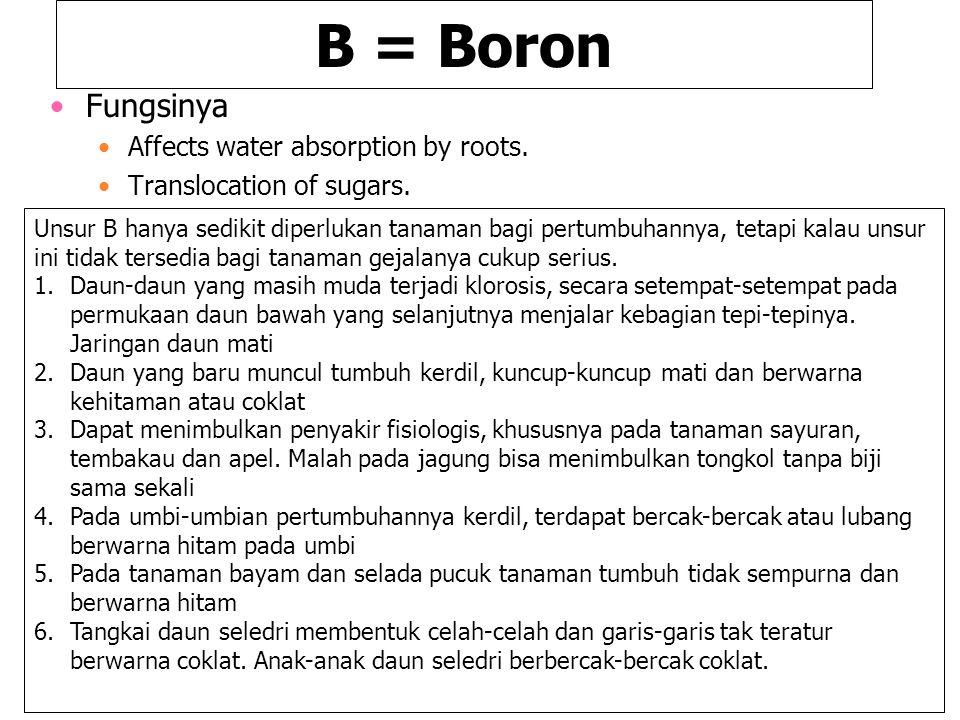B = Boron Fungsinya Affects water absorption by roots. Translocation of sugars. Unsur B hanya sedikit diperlukan tanaman bagi pertumbuhannya, tetapi k