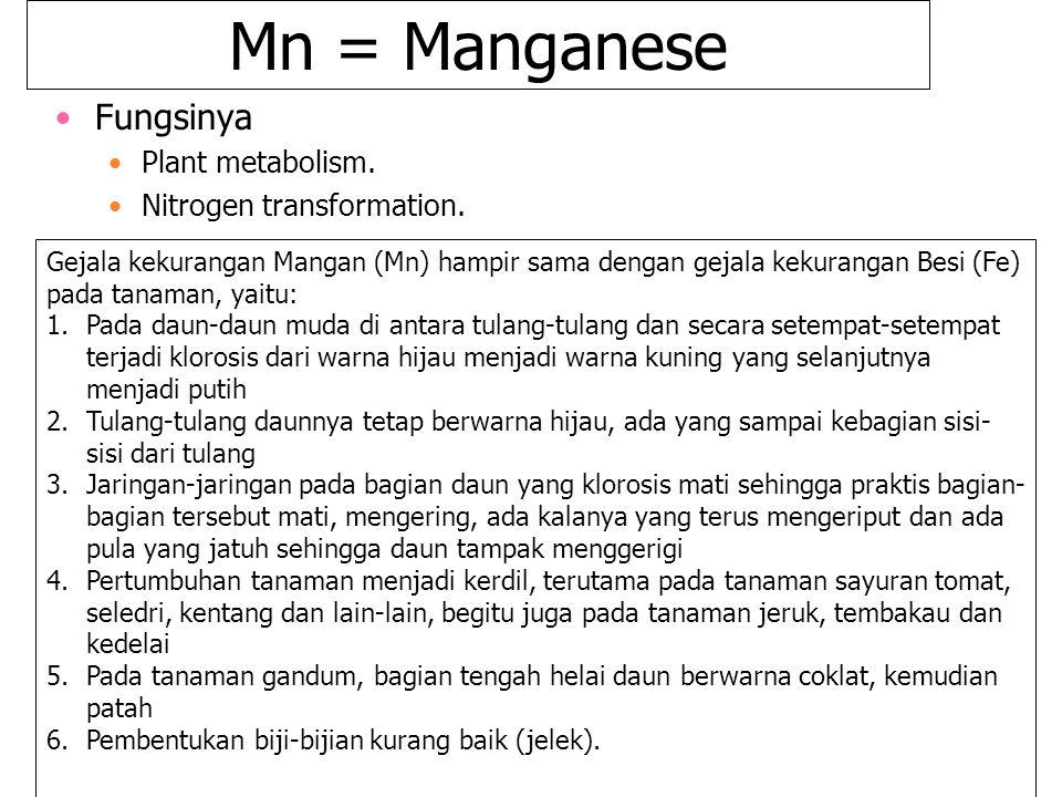 Mn = Manganese Fungsinya Plant metabolism. Nitrogen transformation. Gejala kekurangan Mangan (Mn) hampir sama dengan gejala kekurangan Besi (Fe) pada