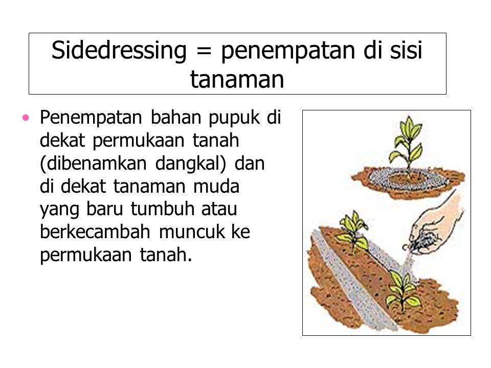 Sidedressing = penempatan di sisi tanaman Penempatan bahan pupuk di dekat permukaan tanah (dibenamkan dangkal) dan di dekat tanaman muda yang baru tum