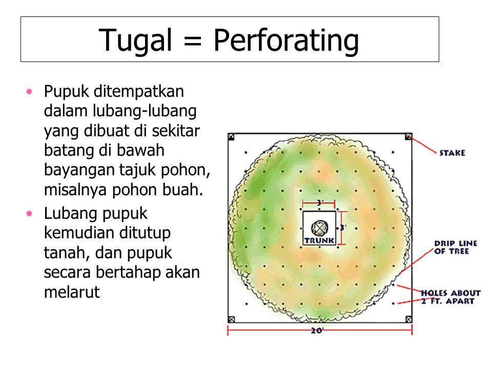 Tugal = Perforating Pupuk ditempatkan dalam lubang-lubang yang dibuat di sekitar batang di bawah bayangan tajuk pohon, misalnya pohon buah. Lubang pup
