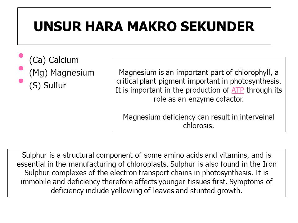 UNSUR HARA MAKRO SEKUNDER (Ca) Calcium (Mg) Magnesium (S) Sulfur Magnesium is an important part of chlorophyll, a critical plant pigment important in