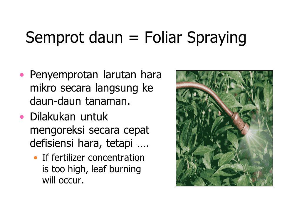 Semprot daun = Foliar Spraying Penyemprotan larutan hara mikro secara langsung ke daun-daun tanaman. Dilakukan untuk mengoreksi secara cepat defisiens