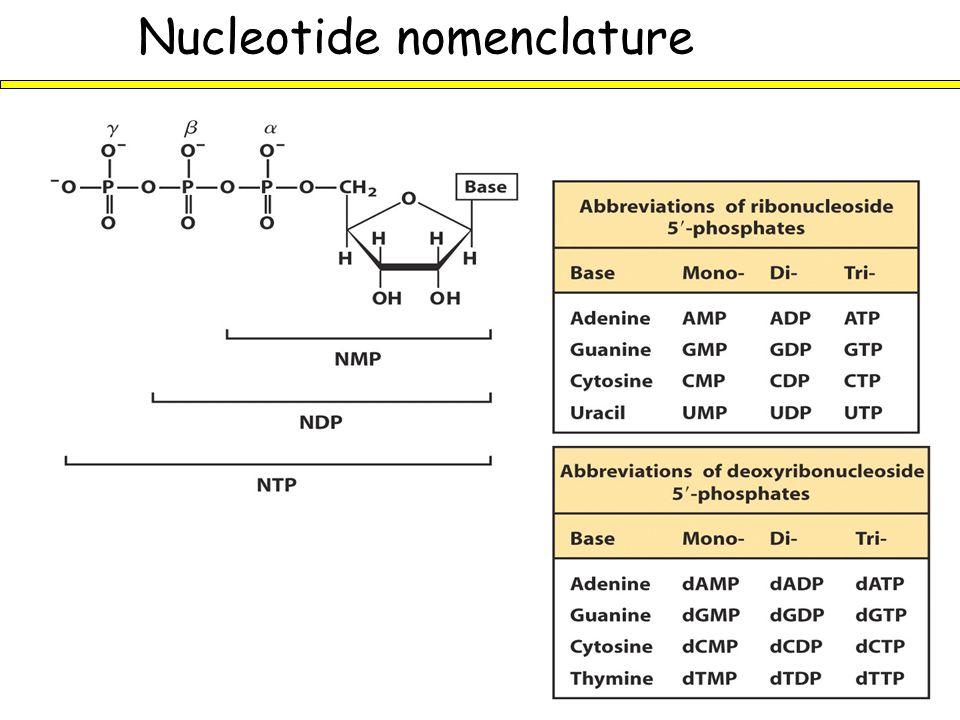 Nucleotide nomenclature