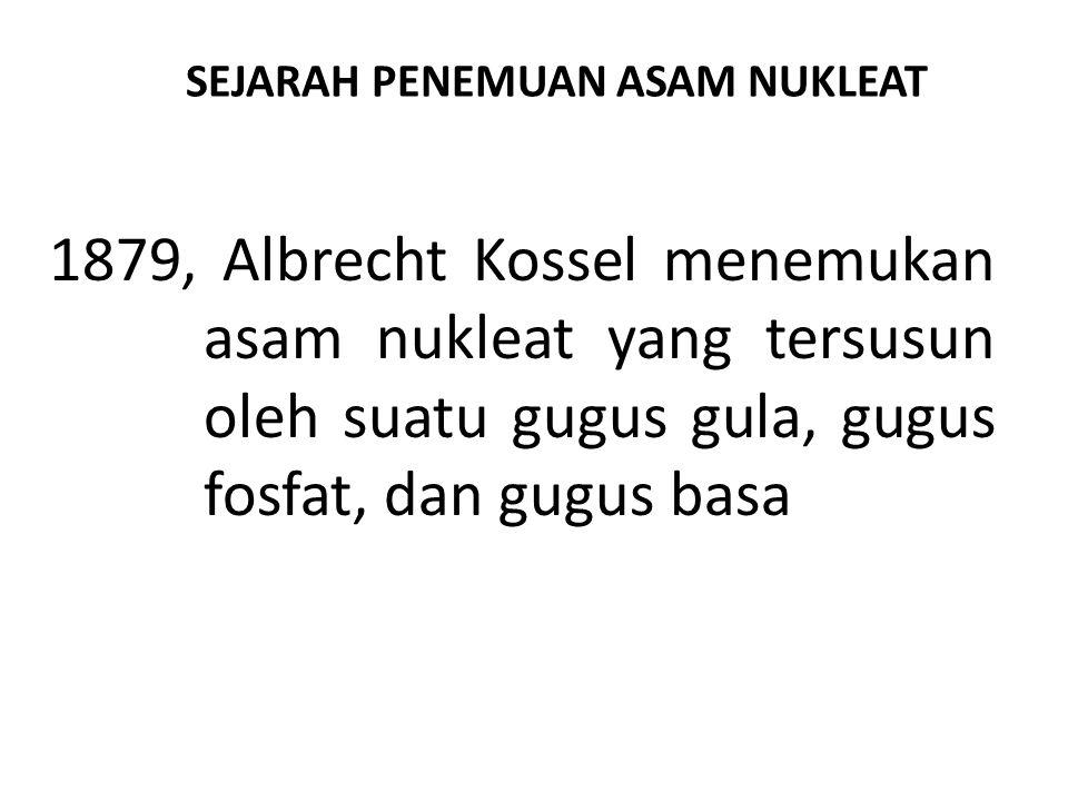SEJARAH PENEMUAN ASAM NUKLEAT 1879, Albrecht Kossel menemukan asam nukleat yang tersusun oleh suatu gugus gula, gugus fosfat, dan gugus basa