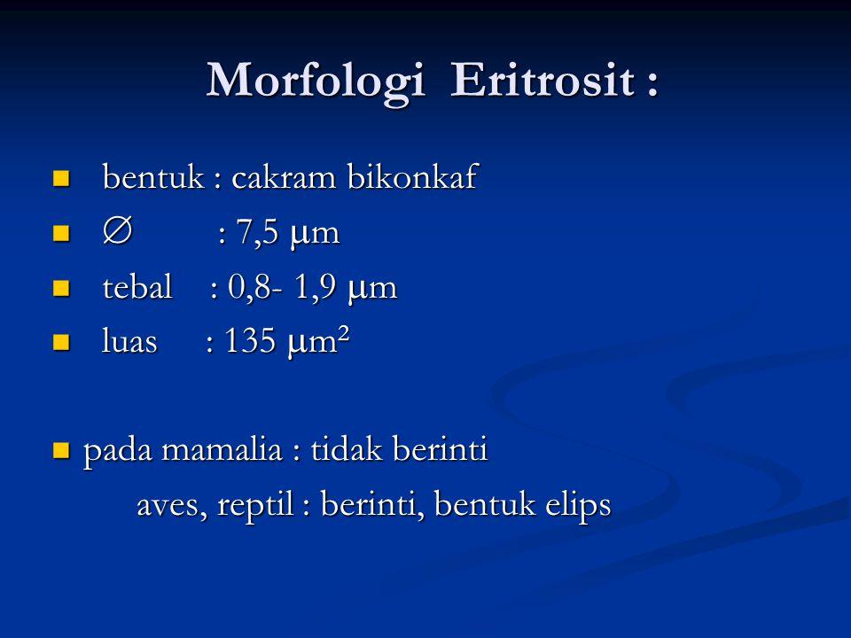 Morfologi Eritrosit : Morfologi Eritrosit : bentuk : cakram bikonkaf bentuk : cakram bikonkaf  : 7,5  m  : 7,5  m tebal : 0,8- 1,9  m tebal : 0,8- 1,9  m luas : 135  m 2 luas : 135  m 2 pada mamalia : tidak berinti pada mamalia : tidak berinti aves, reptil : berinti, bentuk elips aves, reptil : berinti, bentuk elips