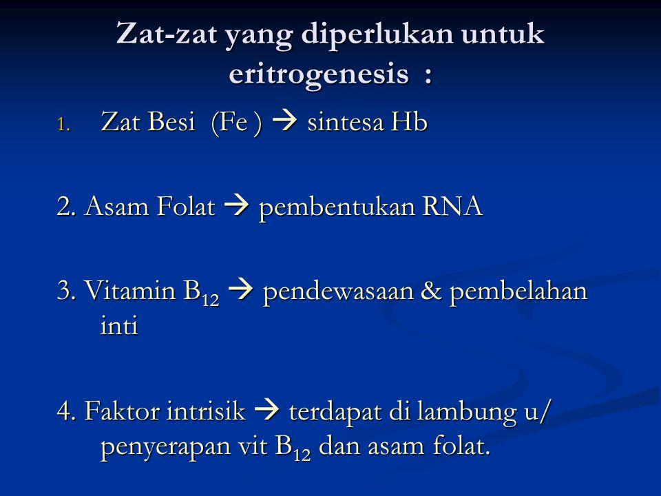 Zat-zat yang diperlukan untuk eritrogenesis : 1. Zat Besi (Fe )  sintesa Hb 2. Asam Folat  pembentukan RNA 3. Vitamin B 12  pendewasaan & pembelaha