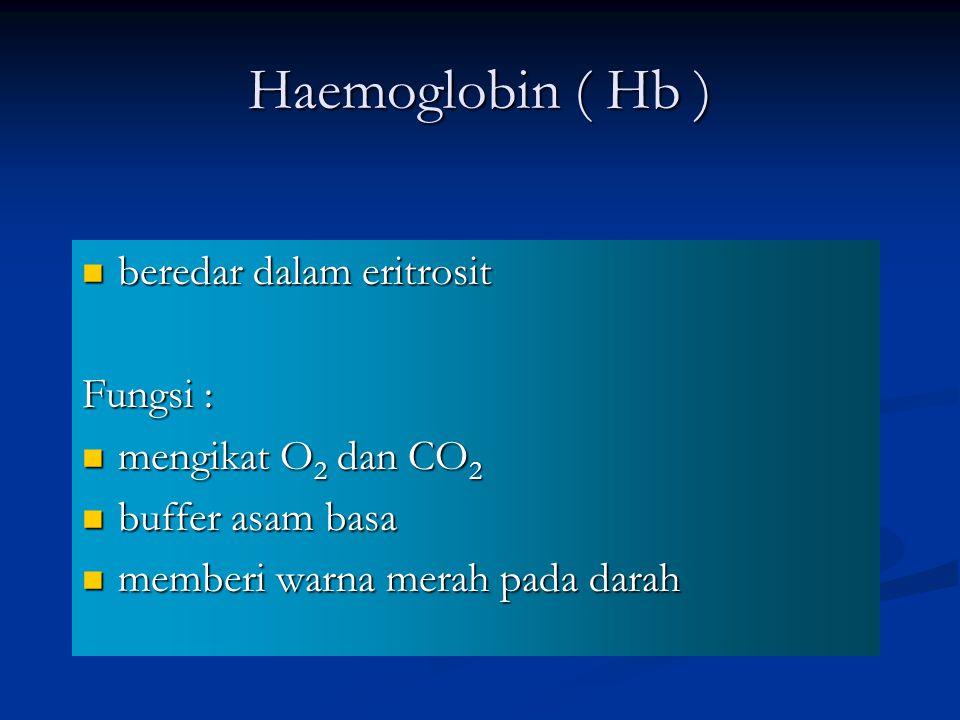 Haemoglobin ( Hb ) beredar dalam eritrosit beredar dalam eritrosit Fungsi : mengikat O 2 dan CO 2 mengikat O 2 dan CO 2 buffer asam basa buffer asam basa memberi warna merah pada darah memberi warna merah pada darah