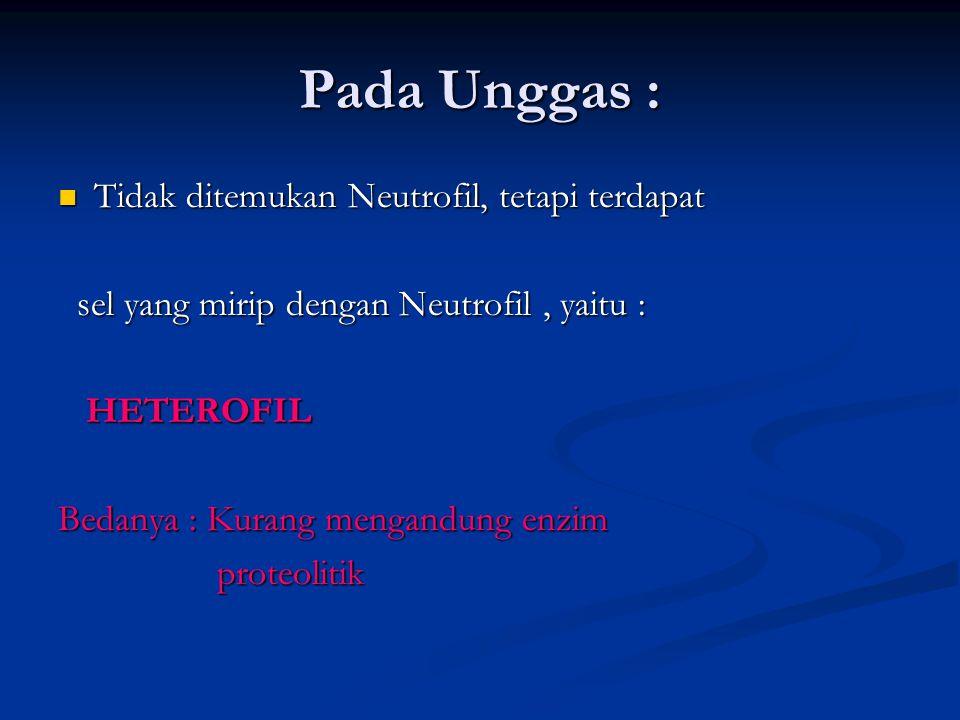 Pada Unggas : Tidak ditemukan Neutrofil, tetapi terdapat Tidak ditemukan Neutrofil, tetapi terdapat sel yang mirip dengan Neutrofil, yaitu : sel yang mirip dengan Neutrofil, yaitu : HETEROFIL HETEROFIL Bedanya : Kurang mengandung enzim proteolitik proteolitik