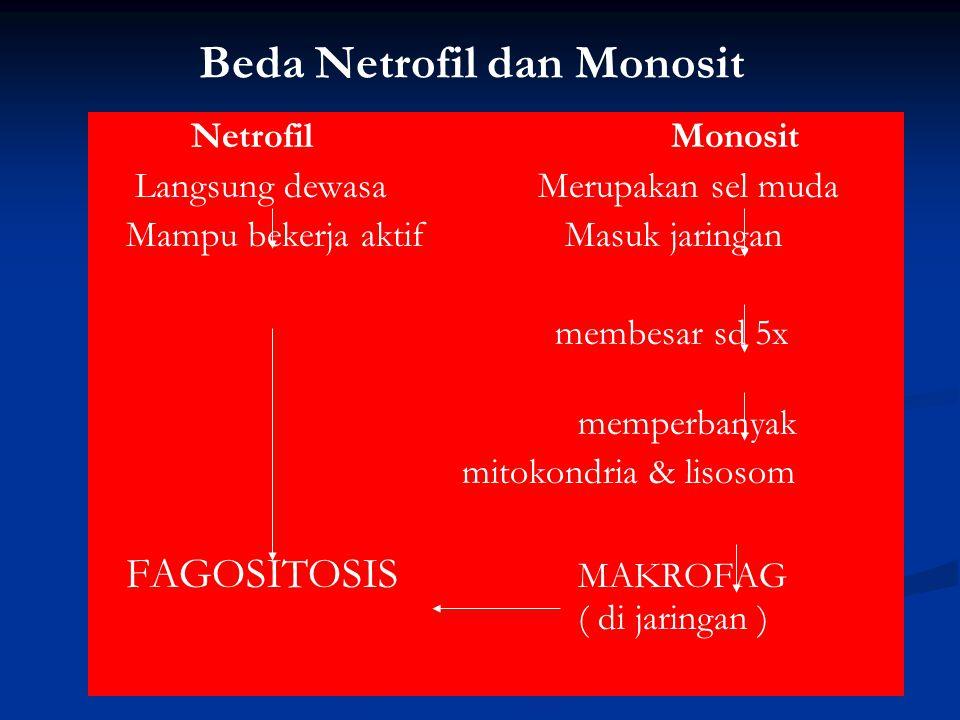 Beda Netrofil dan Monosit Netrofil Monosit Langsung dewasa Merupakan sel muda Mampu bekerja aktif Masuk jaringan membesar sd 5x memperbanyak mitokondr