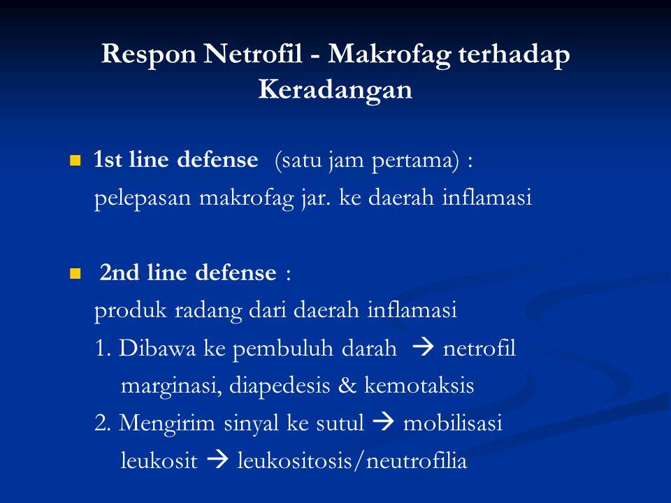 Respon Netrofil - Makrofag terhadap Keradangan 1st line defense (satu jam pertama) : pelepasan makrofag jar. ke daerah inflamasi 2nd line defense : pr