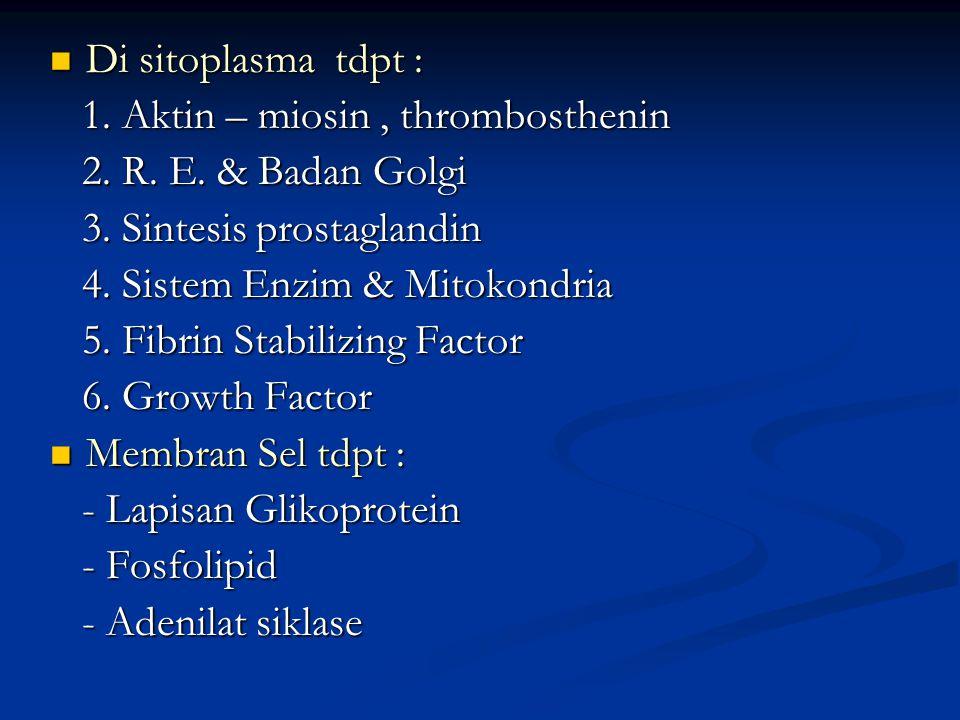 Di sitoplasma tdpt : Di sitoplasma tdpt : 1. Aktin – miosin, thrombosthenin 1. Aktin – miosin, thrombosthenin 2. R. E. & Badan Golgi 2. R. E. & Badan