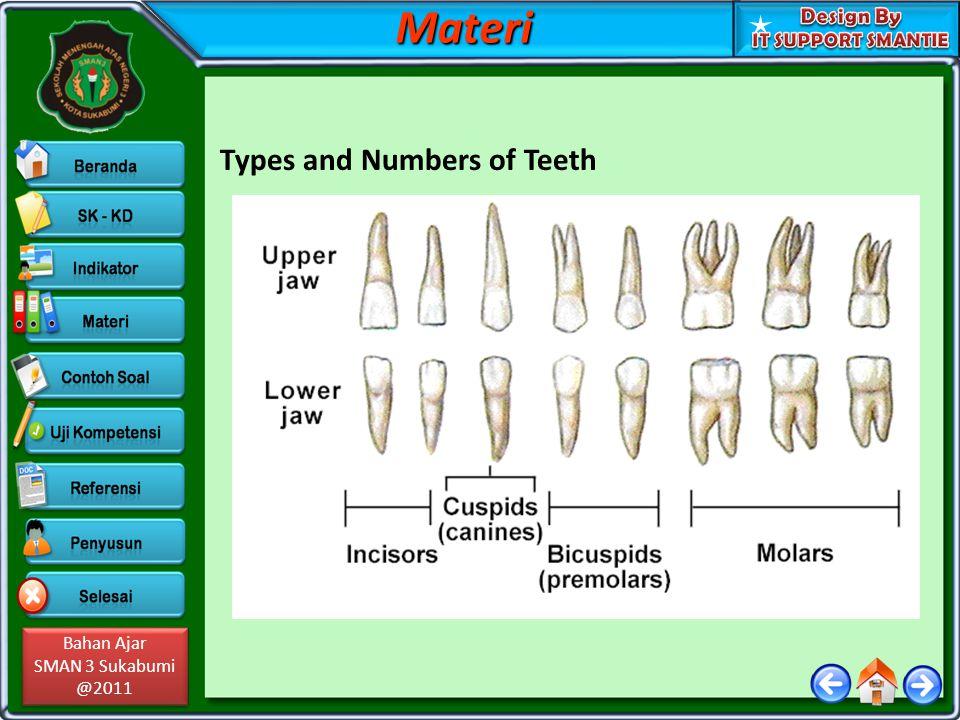 Bahan Ajar SMAN 3 Sukabumi @2011 Bahan Ajar SMAN 3 Sukabumi @2011 Types and Numbers of TeethMateri