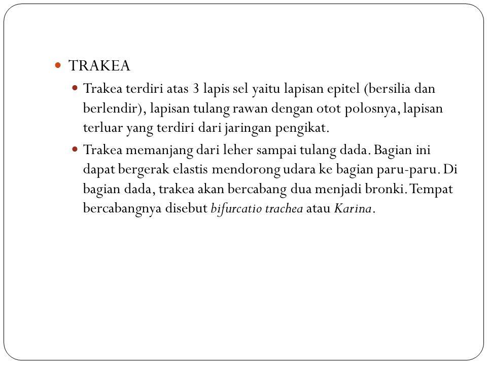 TRAKEA Trakea terdiri atas 3 lapis sel yaitu lapisan epitel (bersilia dan berlendir), lapisan tulang rawan dengan otot polosnya, lapisan terluar yang terdiri dari jaringan pengikat.