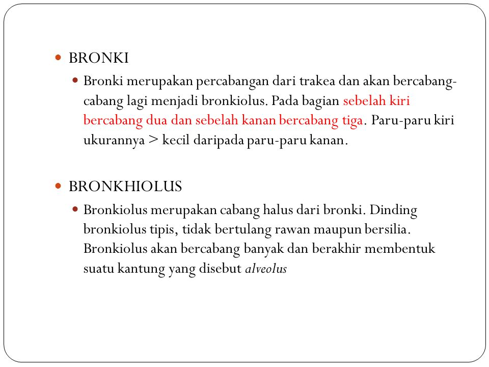 BRONKI Bronki merupakan percabangan dari trakea dan akan bercabang- cabang lagi menjadi bronkiolus. Pada bagian sebelah kiri bercabang dua dan sebelah